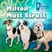 Milton Mutt Struttthumb