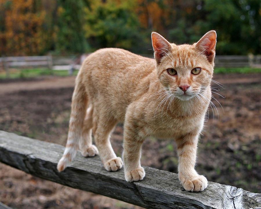 barncat 1