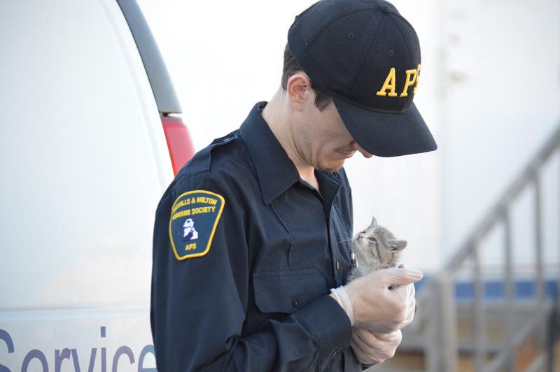 apsandkitten - Enforcement & Rescue Services