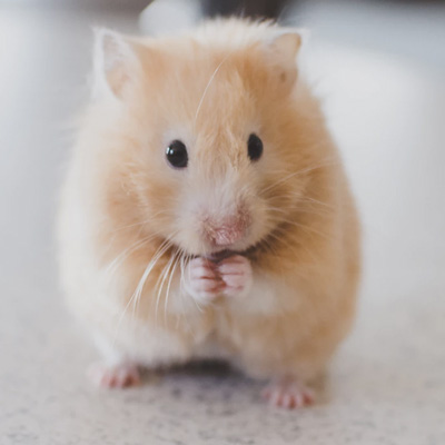 Hammy - Small Animal Re-homing Form
