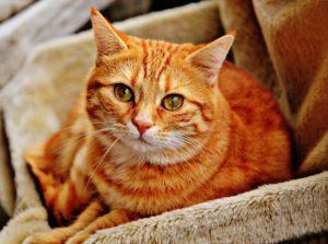 Adoption Costs - Oakville & Milton Humane Society
