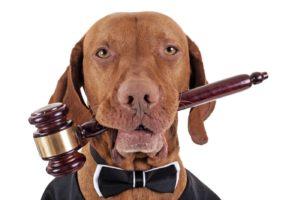 Judge Dog 300x200 - Bylaw Enforcement & Investigations