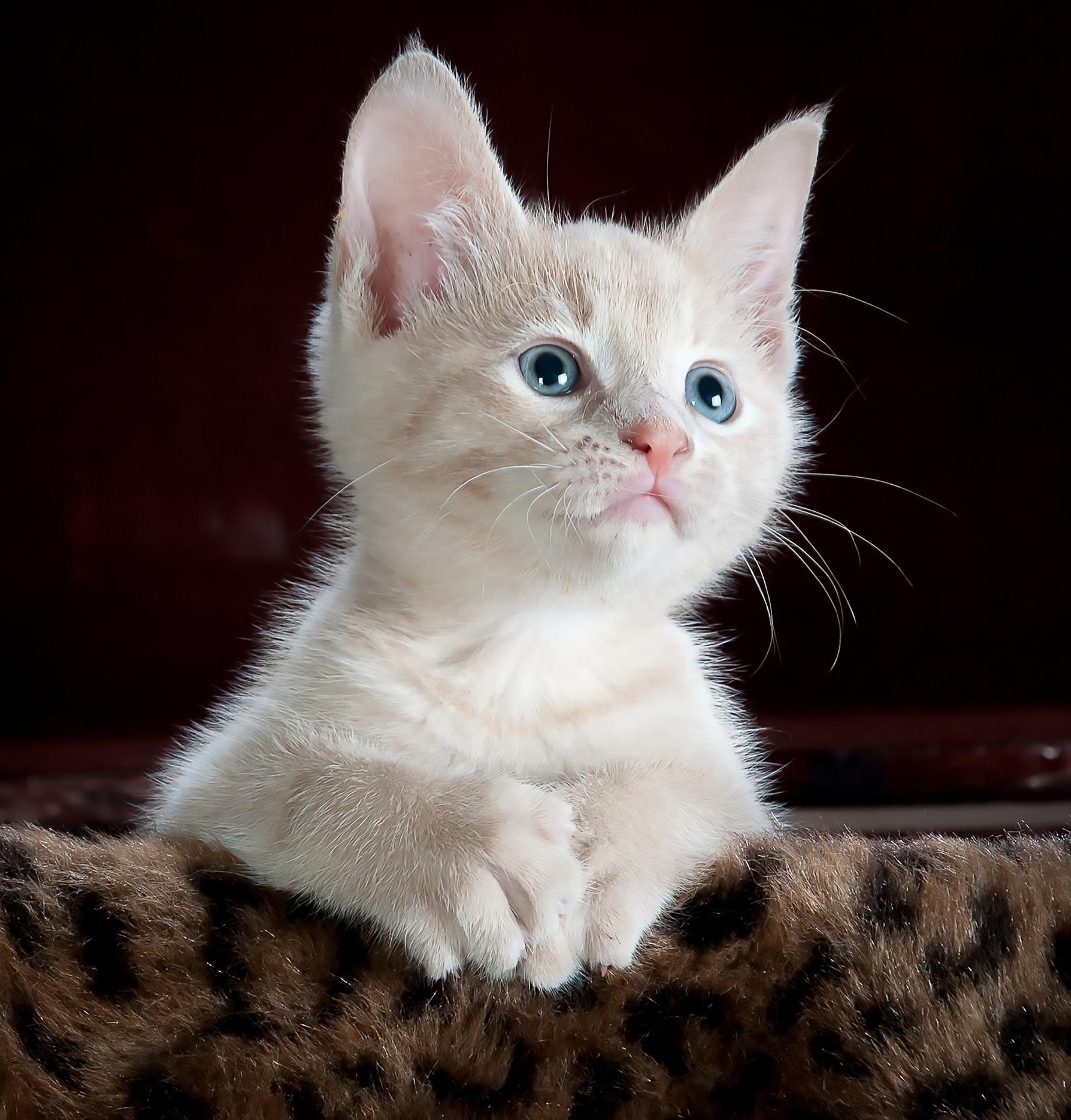 NAIL TRIM CAT - Cat & Small Animal Nail Trim Form