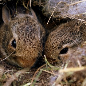 bunnies 2989227 960 720 - Enforcement & Rescue Services