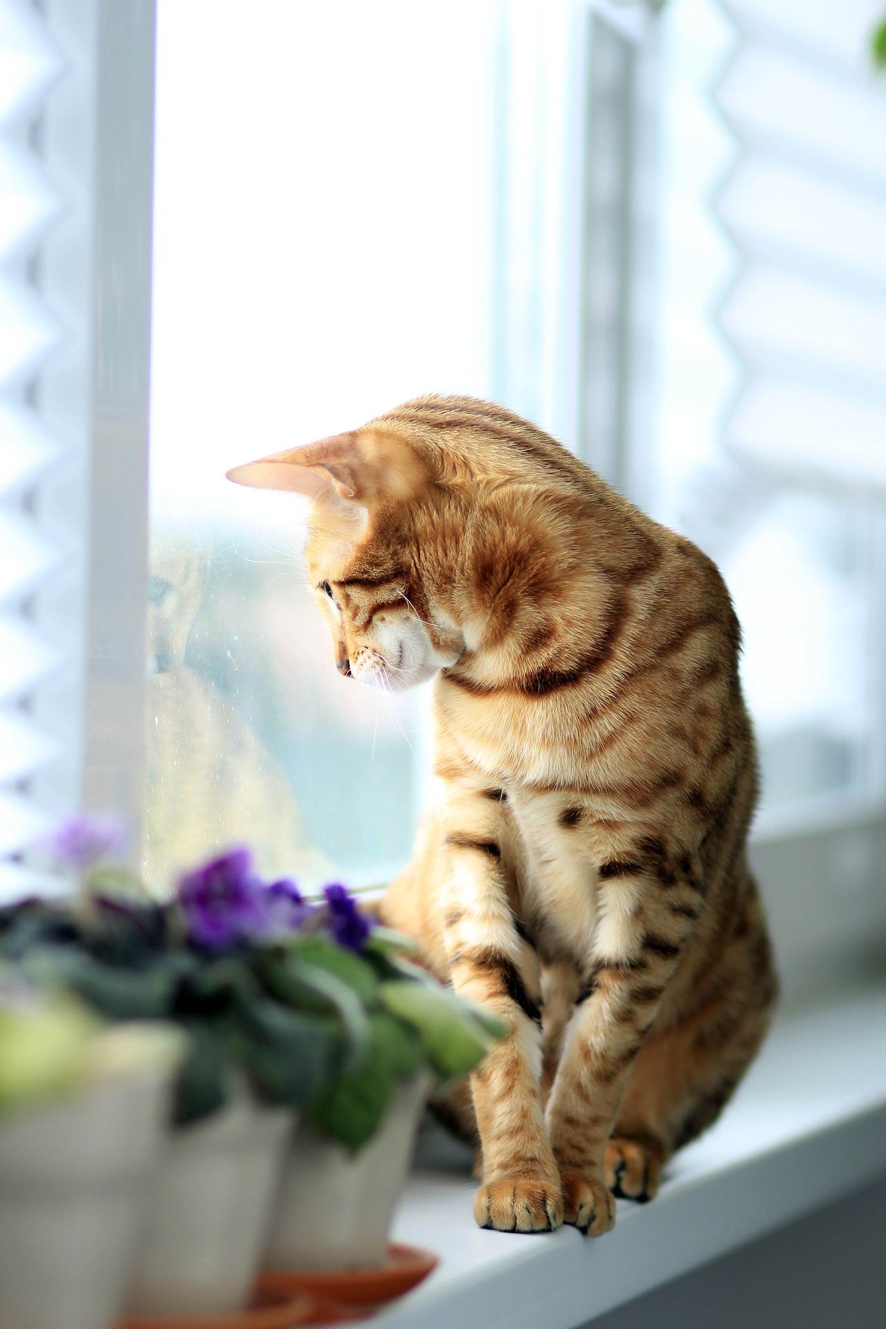 cat window 2 - Offsite Adoption Locations