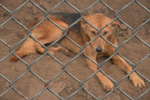 dog 509103 1920 300x200 - Bylaw Enforcement & Investigations