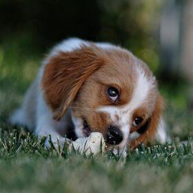 adorable animal animal photography 672244 - Dog Training Classes