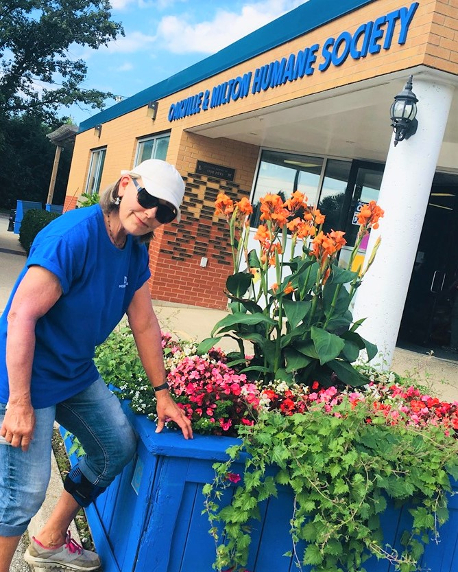 sue1 for Fetch - OMHS Blooms! A Big Green Thumbs up to Susan Eglit
