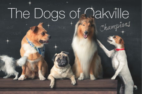Dogs of Oakville – Champions