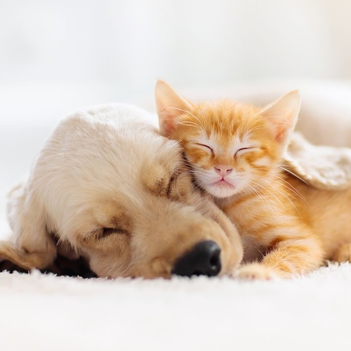 cat dog pets - Home