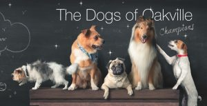 champions cover full 300x154 - Dogs of Oakville - Champions