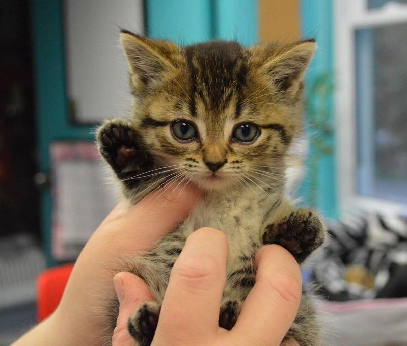 Waving Kitten all for the animals - Pawsitive Partner Birthday Celebrations