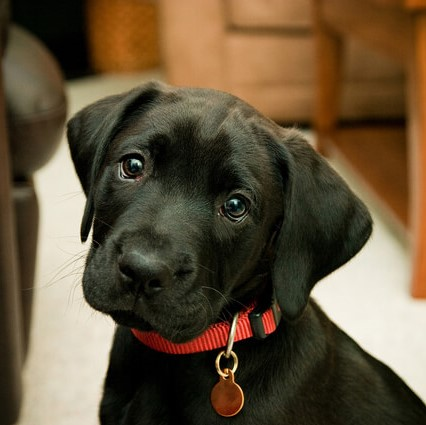 Dog Licence - Home