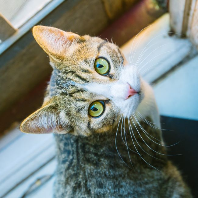 Square Spay Neuter Cat Picture - What's Happening