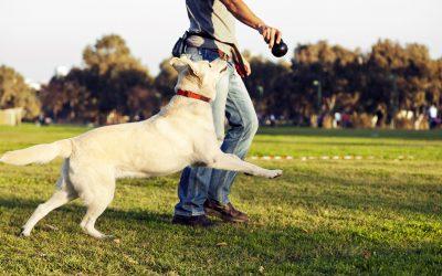 dog playing1 400x250 - News
