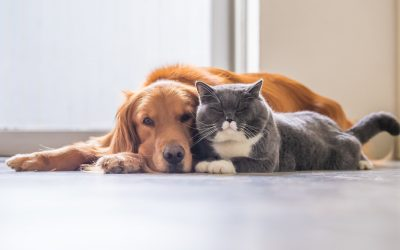 Cat and dog 400x250 - News