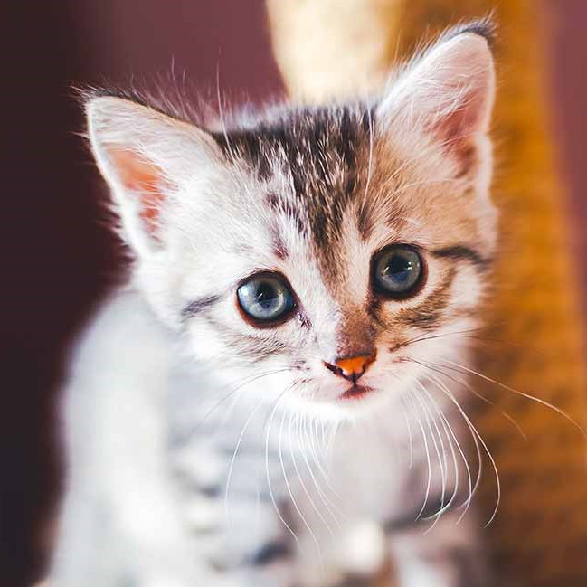 Kitten Names HC long - Donate