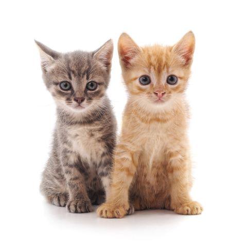 Adopt A Pet rs - Home