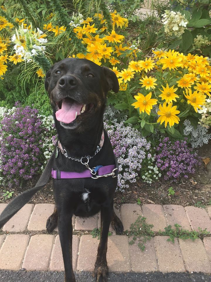 Daffodil - Relive Daffodil's Amazing Journey by Playing  Mission Pawsible: Homeward Bound!