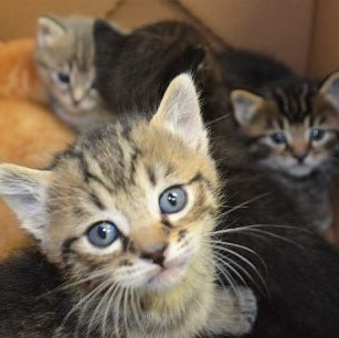 Sponsor A Litter - Gifts That Give