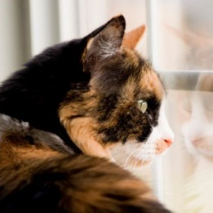 Separation Anxiety in Pets - Home