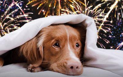 fireworks1 400x250 - News