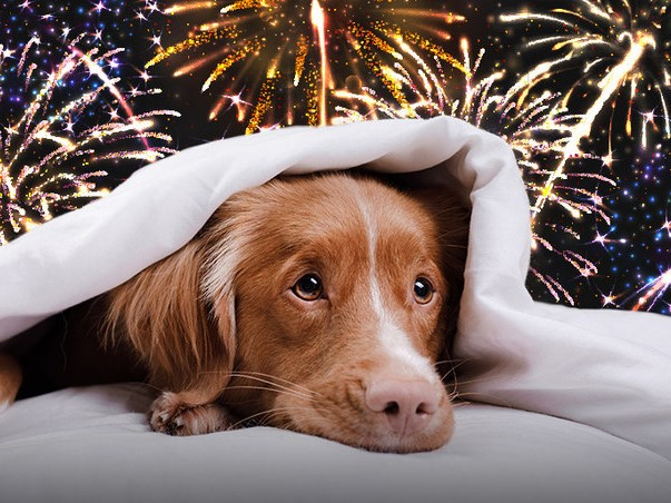 Fireworks Can Frighten Pets