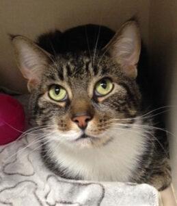 FLAH cat 259x300 - Veterinarian Spotlight: Fourth Line Animal Hospital