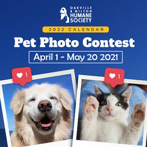 Pet Photo Contest 2021 square - Home
