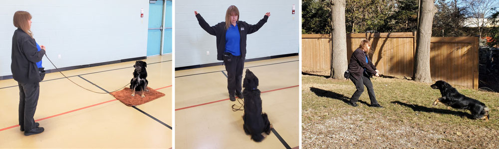 dog training collage - Dog Training Classes