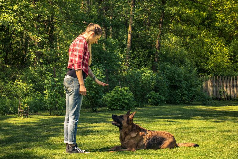 dog training - Dog Training Classes