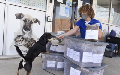 pet food bank 400x250 - News